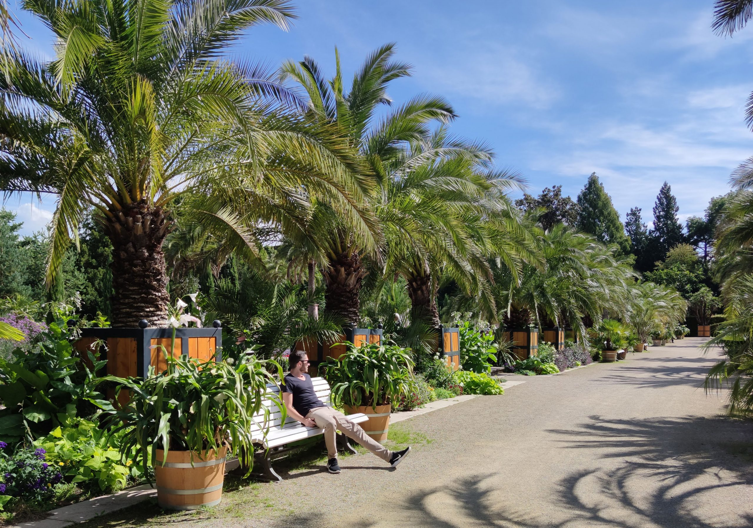 Im Kurpark Bad Pyrmont können Sie unter Palmen entspannen.